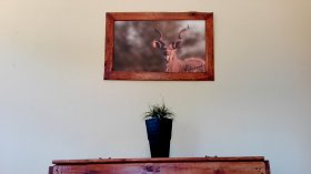Wildlife Focus Photography, Custom Frames, Canvas Framing, Canvas Photography, Home Decor, Creator Creations Custom Furniture White River / Nelspruit, Mpumalanga